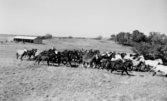 Horse Industry | The Encyclopedia of Oklahoma History and