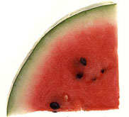 watermelon, the state vegetable